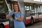 Stále více žen řídí v Brně tramvaje. Sedí také za volantem autobusu.