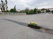 Hnutí Královopolští patrioti upozornili na díru v brněnské Křižíkově ulici svérázným způsobem. Nasadili do ní květiny.
