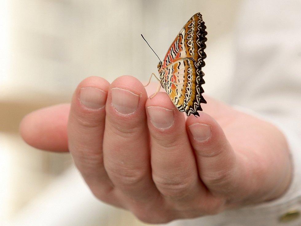 Kukly a motýli ve sklenících arboreta Mendelovy univerzity v Brně.