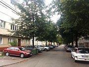 Lipová alej v brněnské Vodově ulici, které kvůli rekonstrukci potrubí hrozí kácení.
