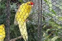 Botanické zahradě v Brně vládnou pestré barvy papoušků a kanárků.