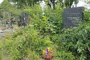 Neudržované hroby na Ústředním hřbitově v Brně.
