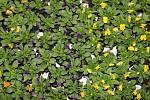 Mezinárodní zahradnický veletrh s názvem Zelený svět lákal návštěvníky rostliny všeho druhu.