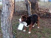 U hřbitova v Lanžhotské ulici v Břeclavi někdo uvázal psa a nechal jej tam se vzkazem.