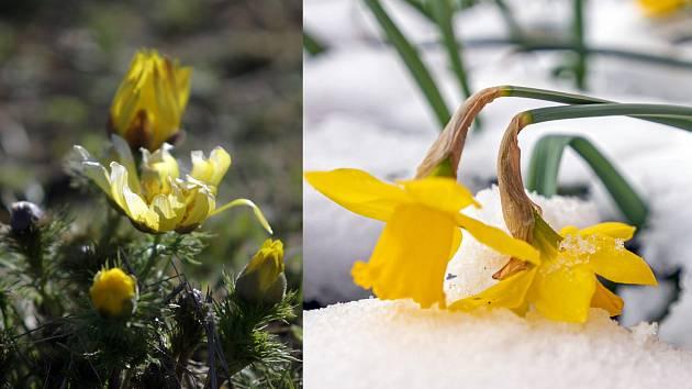 Dvě tváře jara na jižní Moravě.