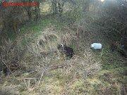 Téměř čtrnáct dní se strážníci věnovali četným oznámením o nepolapitelném kozlovi na jihu Brna. V Holáskách a Brněnských Ivanovicích běhal mezi domy a místním obyvatelům vnikal do zahrad.
