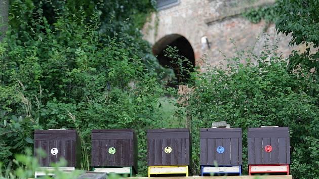 Pět včelstev nově bzučí pod brněnským hradem Špilberk.