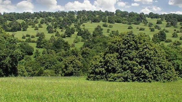 Jihomoravská přírodní rezervace Čertoryje.