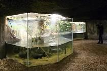 Zvířata v brněnské zoo budou mít nové sousedy.