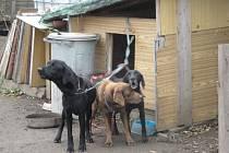 Trojici týraných psů našlo brněnské pracoviště Úřadu pro zastupování státu ve věcech majetkových nový domov.
