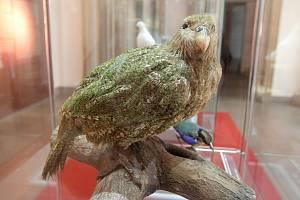 Exponáty, kterými se pyšní Moravské zemské muzeum v Brně, sbírali odborníci v pralesech i za polárním druhem.
