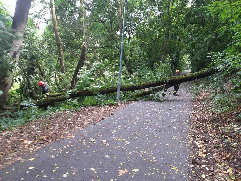 Cyklostezku v brněnských Pisárkách přeťal po bouřce spadlý zlomený strom.