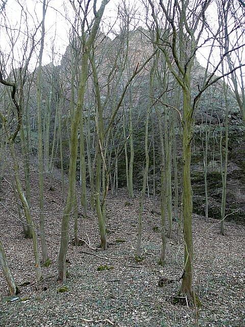 Místo je chráněné i kvůli slepencovým skalám, které obklopují přirozené koryto řeky Rokytná.