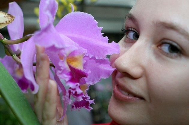 Z výstavy orchidejí