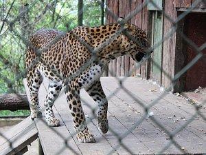 Vstup zdarma i s komentovanou prohlídkou nabídla lidem v sobotu dopoledne brněnská zoo. Vše jako připomenutí Johanna Gregora Mendela.
