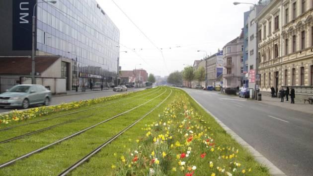 Tramvajovou trať na Nových sadech ozdobí luční trávník s květinou loukou.
