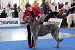 Psi různých plemen zaplnili od soboty do neděle pavilon V brněnského výstaviště. Konala se tam Hanácká národní výstava psů.
