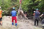 Vyprošťování koně z bažiny v lese u Újezdu u Rosic.