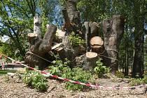 Od začátku letošního roku vykácela společnost Kaisler v Komíně tři sta sedmdesát stromů a keřů.
