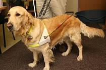 Slepecký pes Janetta.
