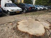 Místo čtyř poškozených topolů u Moldavské ulice v brněnských Bohunicích stojí od minulého týdne pouze jeden z nich. Nechali je vykácet představitelé městské části. Některým z místních se to nelíbí.