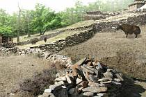 V brněnské zoo přibudou i další nové expozice, například v části Himaláj se návštěvníci projdou po horském treku.