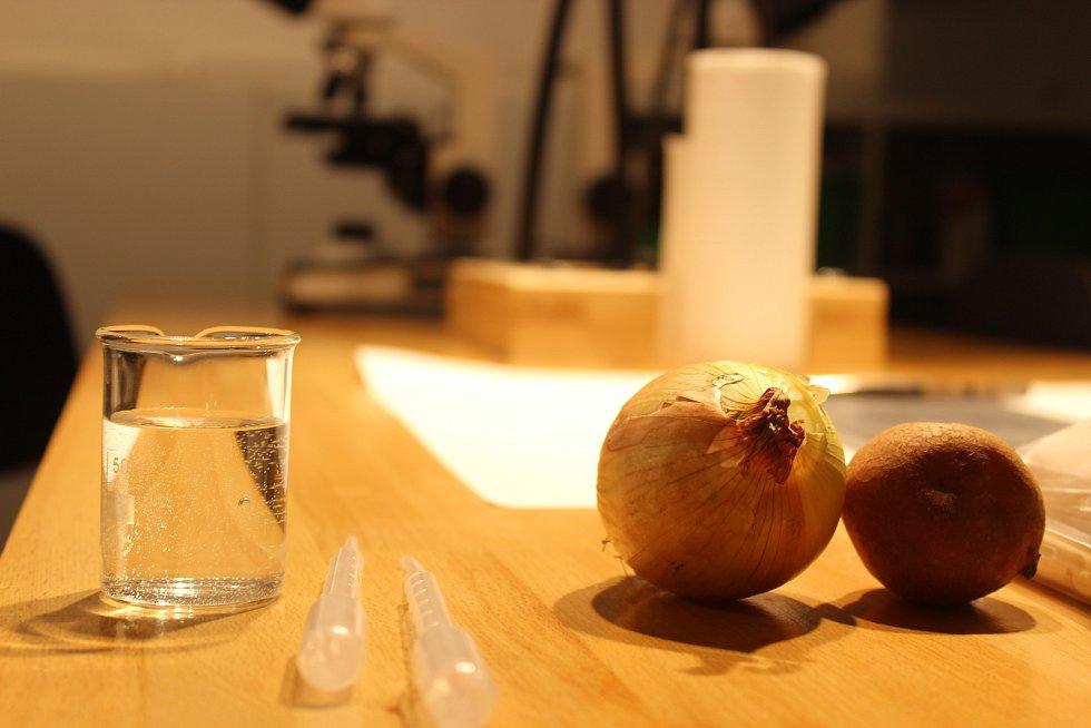 První listopadovou neděli mohli návštěvníci v brněnském Vida centru prozkoumat mikrosvět. K dispozici měli různé mikroskopy či fotografie.