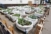 Skupina nadšenců pěstuje zeleninu v Masné ulici, kam se zahrada letos přestěhovala z Leitnerovy.