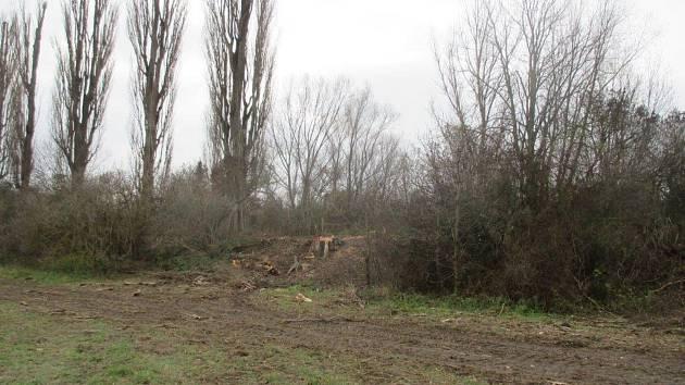 Před Vánoci museli v Řečkovicích vykácet devět topolů. Letos na jaře tam zahradníci vysadí pětatřicet stromů nových.