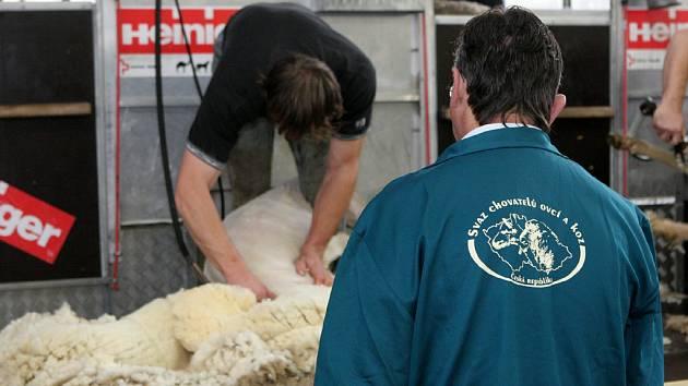 Mistrovství ČR ve střihání ovcí