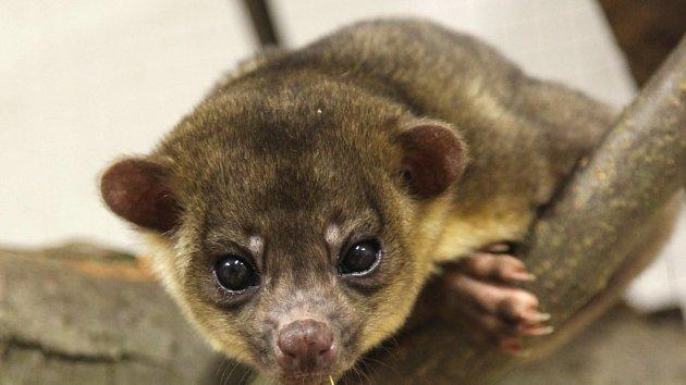 Tropické království nově obývají medoví medvědi a leguán s ostny na ocasu