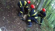 Specializovaná jednotka hasičů zachraňovala daňka, který se zamotal do pletiva.