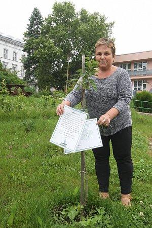 Jeden ze sedmi vzácných štěpů zpamátného stromu vysadili před měsícem lidé vIvančicích.