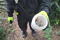 Brněnští strážníci sbírají použité injekční stříkačky povalující se v parcích, na ulicích nebo u dětských hřišť. V rámci akce Jehla jich ve čtvrtek ve městě našli přes tři sta.
