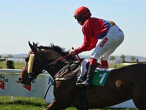 Na brněnských dostizích Dvorska se ukázalo jednasedmdesát koní.