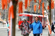 Stromy u brněnského dopravního uzlu Česká obsypalo velké množství mrkví. Na mezinárodní den mrkve je tam rozmístili zástupci brněnské oční kliniky Neovize.