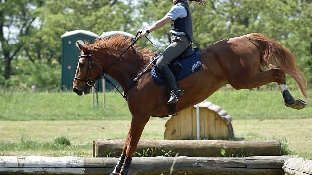 Mezinárodní policejní mistrovství v jezdectví. Ilustrační foto z předchozího ročníku.