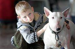 Výstava psů na brněnském výstavišti