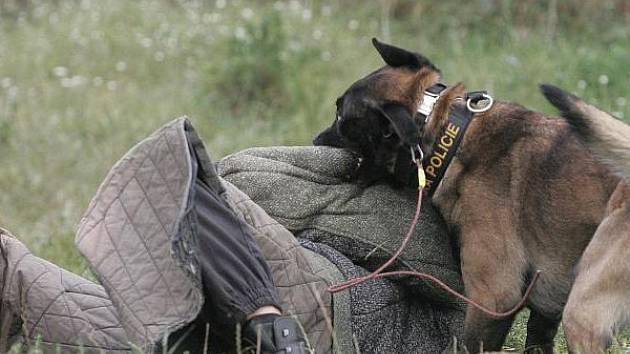 Policejní pes v akci. Ilustrační foto.