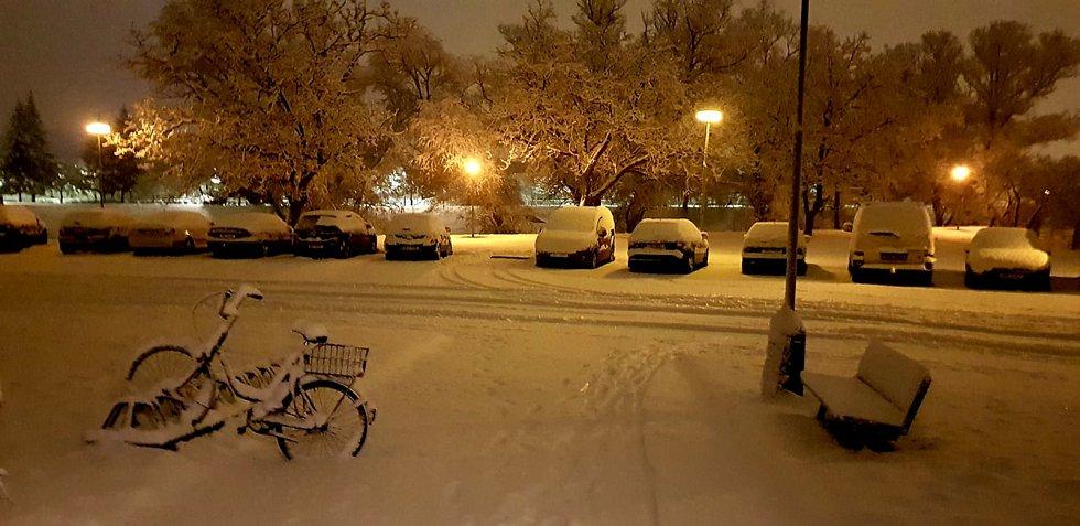 Sněhová kalamita na Břeclavsku - leden 2019.
