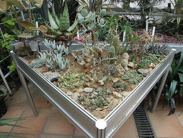 Tradiční výstava kaktusů a sukulentů v Botanické zahradě Masarykovy univerzity.