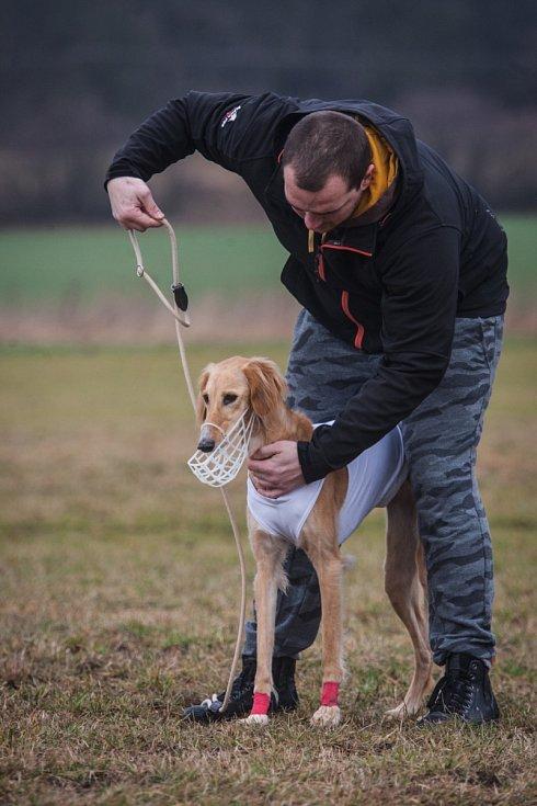 V závodní dráhu se v neděli změnilo letiště v brněnských Medlánkách. Takzvaný coursing, ve kterém se pes snaží ulovit návnadu z igelitových pásků, tam trénovali jedinci velkých i malých plemen.