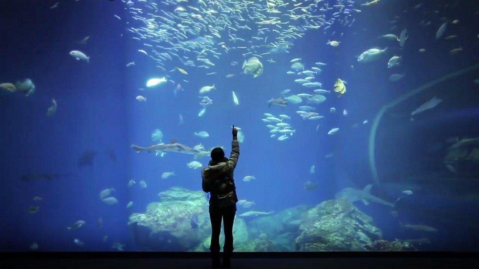 Nová zoo do Brna přenese severní pól