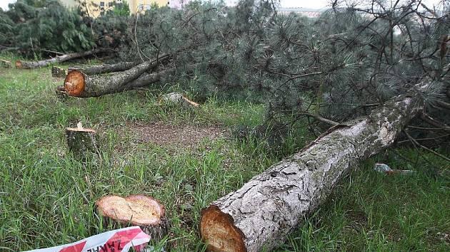 Pokácené borovice v brněnské Líšni.