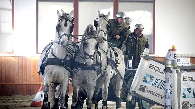 Závody koňských spřežení v hale. Ilustrační foto.