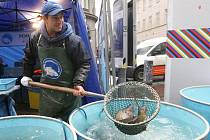 Kdo chce sehnat kapra v předstihu, má už možnost. První ryby se objevily na stáncích ve středu.
