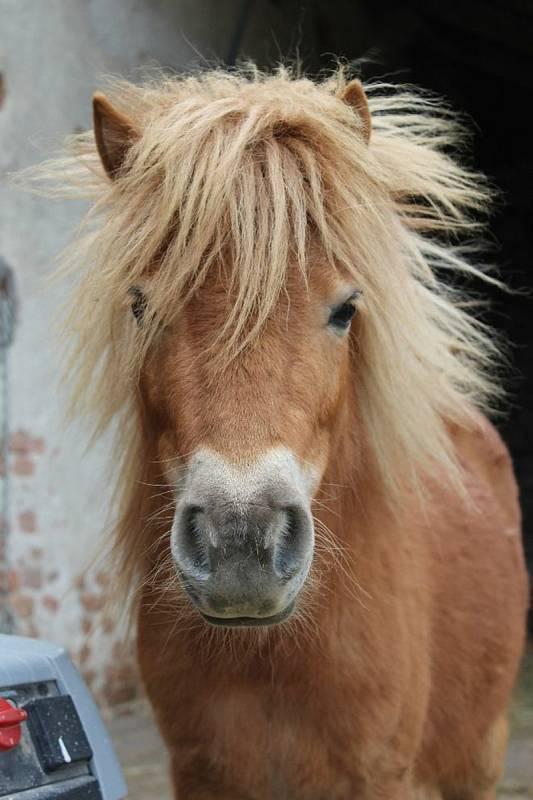 Zvířecí terapeuti mohou být i slepice či králíci. Mezi obvyklé terapeuty patří koně a psi. Na Brněnsku se zvířecím terapeutům věnuje spolek PONYPRO.