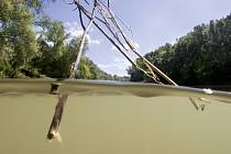 Tok Dunaje sledoval Müller-Pohle v letech 2005 a 2006. Postupoval od západu k východu, od pramene v Německu až do delty řeky v Rumunsku. Cyklus fotografií The Danube River Project patří k jeho nejznámějším z posledních let.
