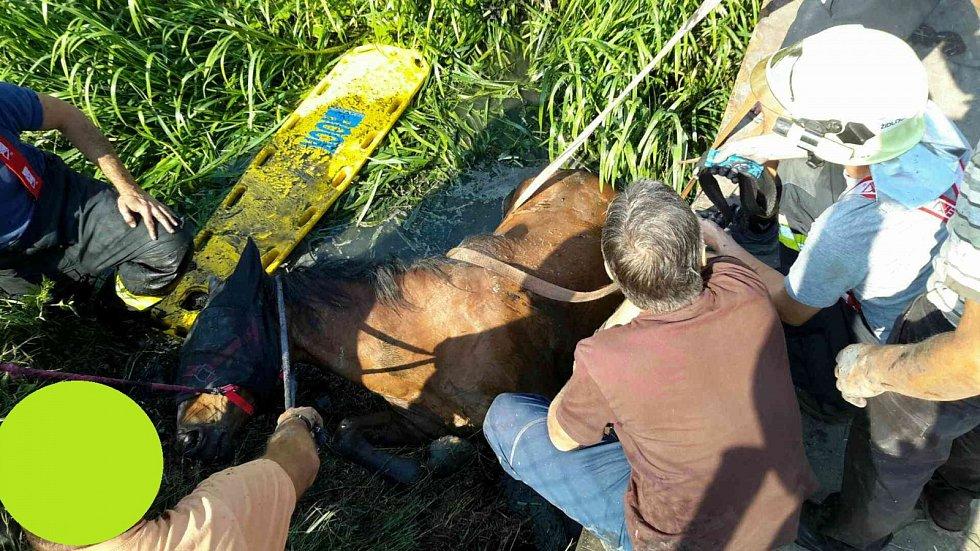 V sobotu spadl kůň v Hrušovanech u Brna do bahnitého potoka a nemohl se dostat zpět na břeh. Pomohli mu hasiči.