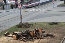 Stínily a chránily lidi před hlukem, nakonec se staly obětmi oprav kabelového vedení. Lidi žijící v brněnské Kounicově ulici přišli o čtyři vzrostlé stromy.